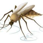 Muggenjeuk